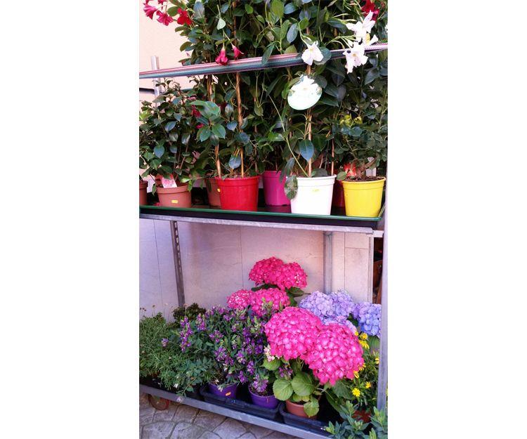 Herramientas de jardinería en Palma de Mallorca