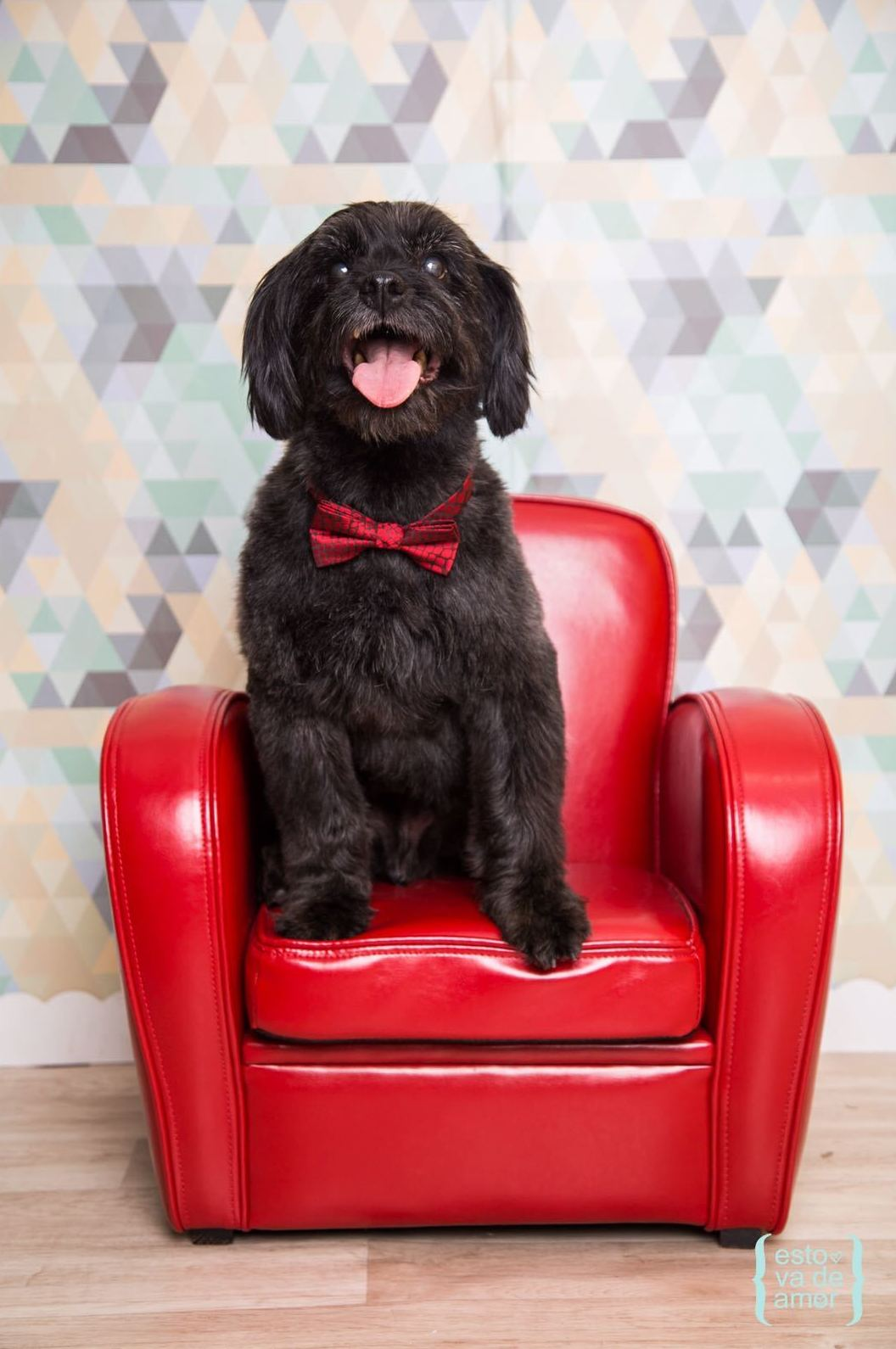 Estetica Canina Sants