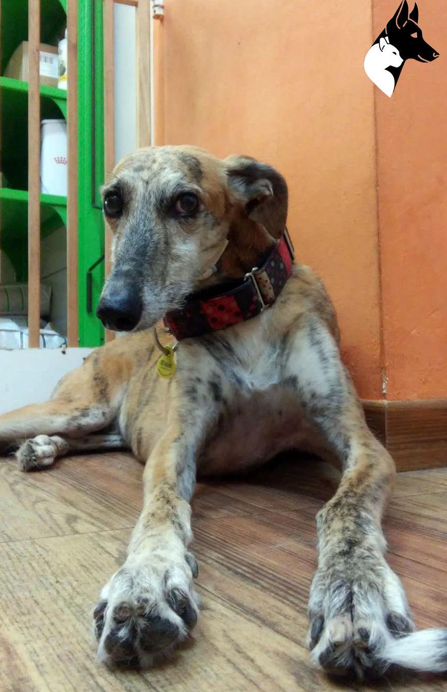 estética canina sants barcelona