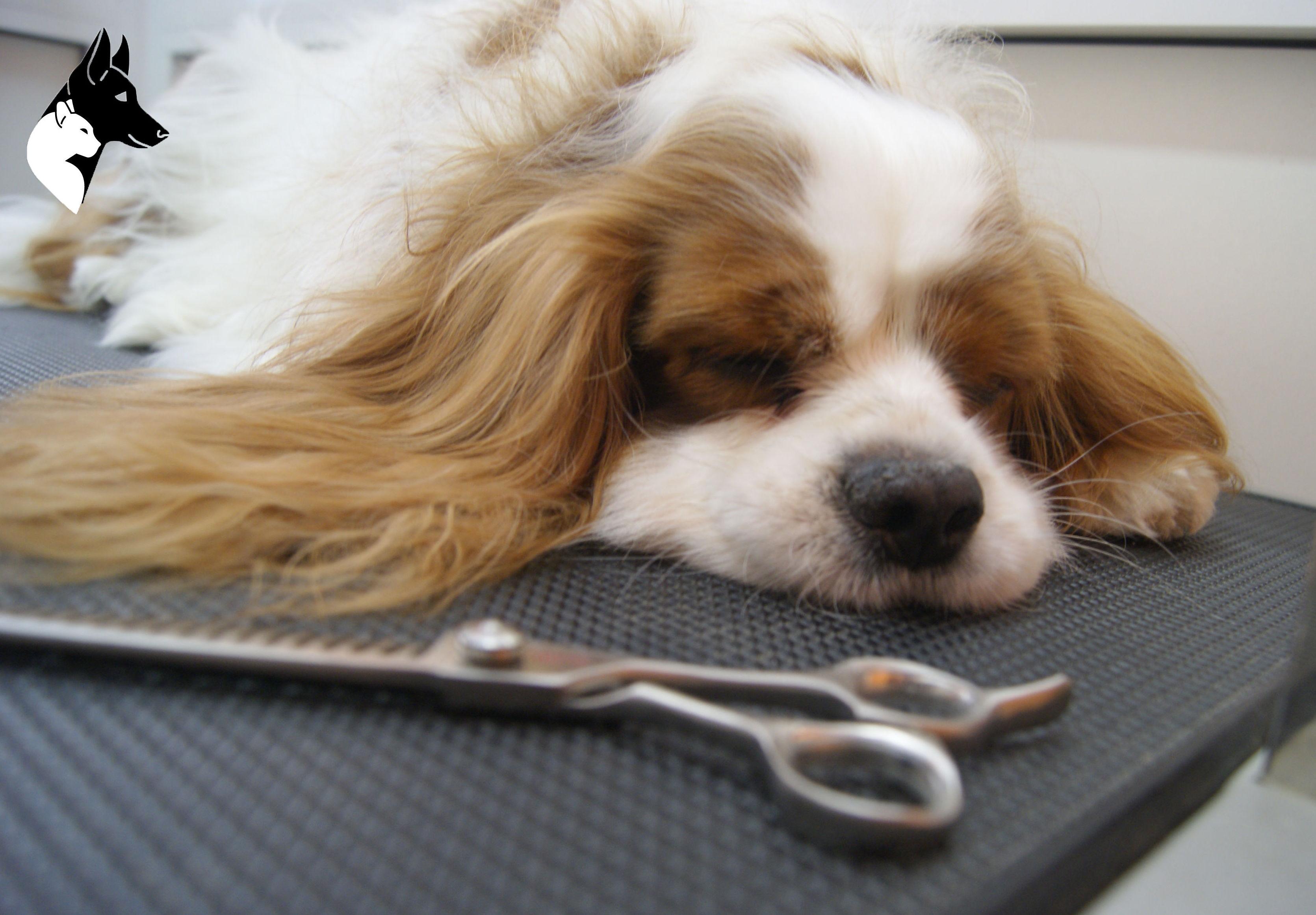 Peluquería y estética canina en Barcelona