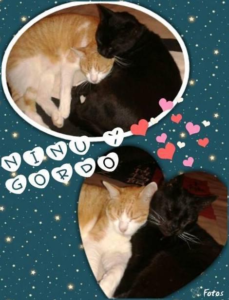 Ninu y Gordo. Peluquería felina sants