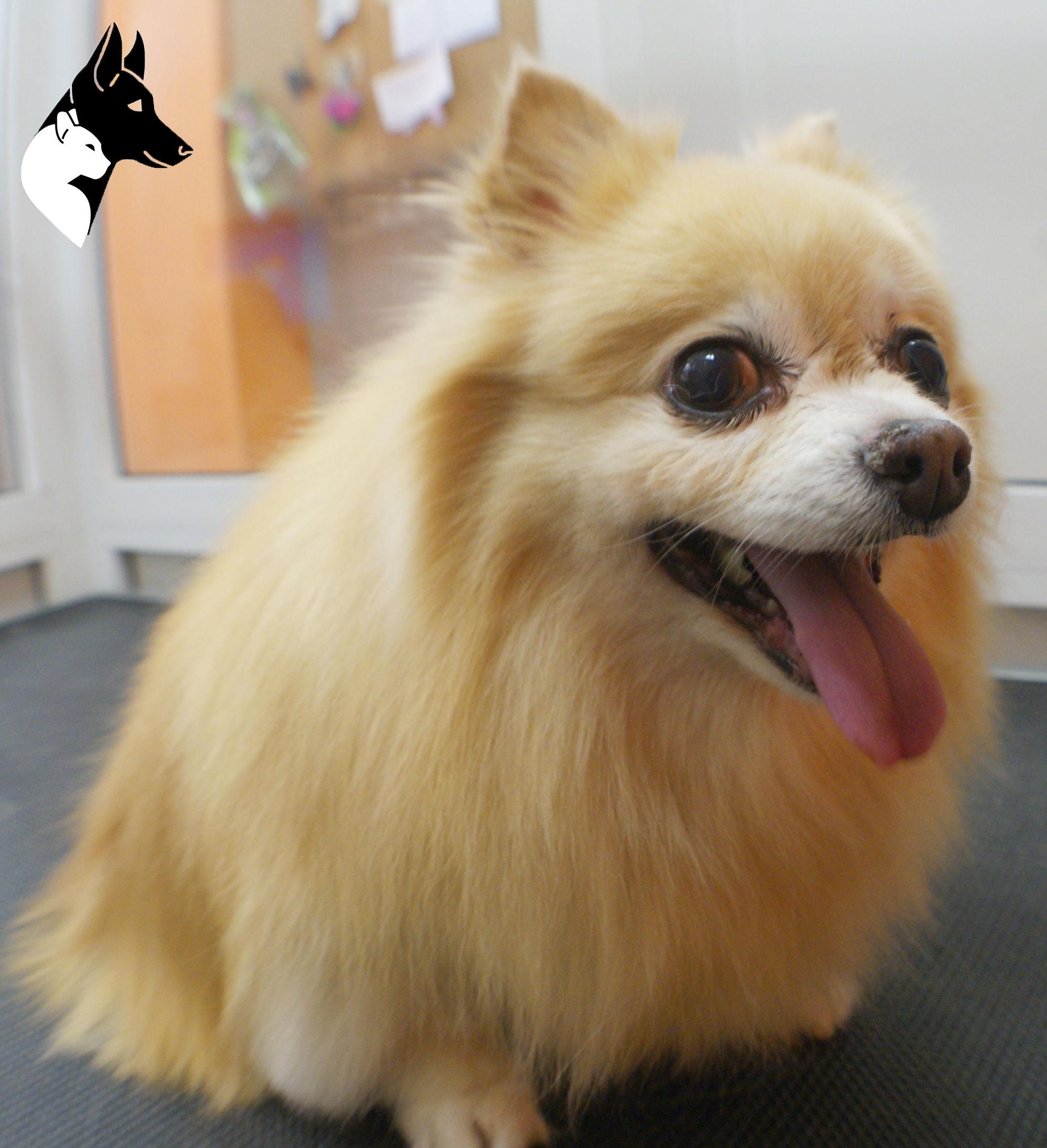 Gordi en Estética canina sants