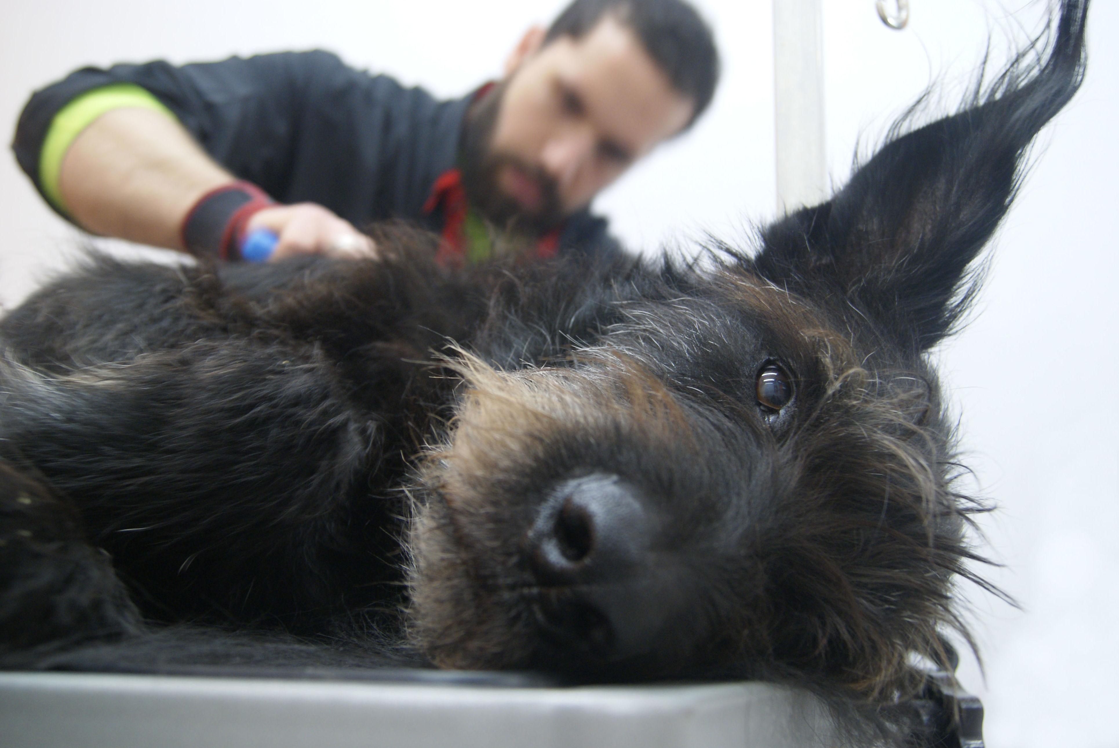 Estética canina Sants: Productos y servicios  de Grans Peluts