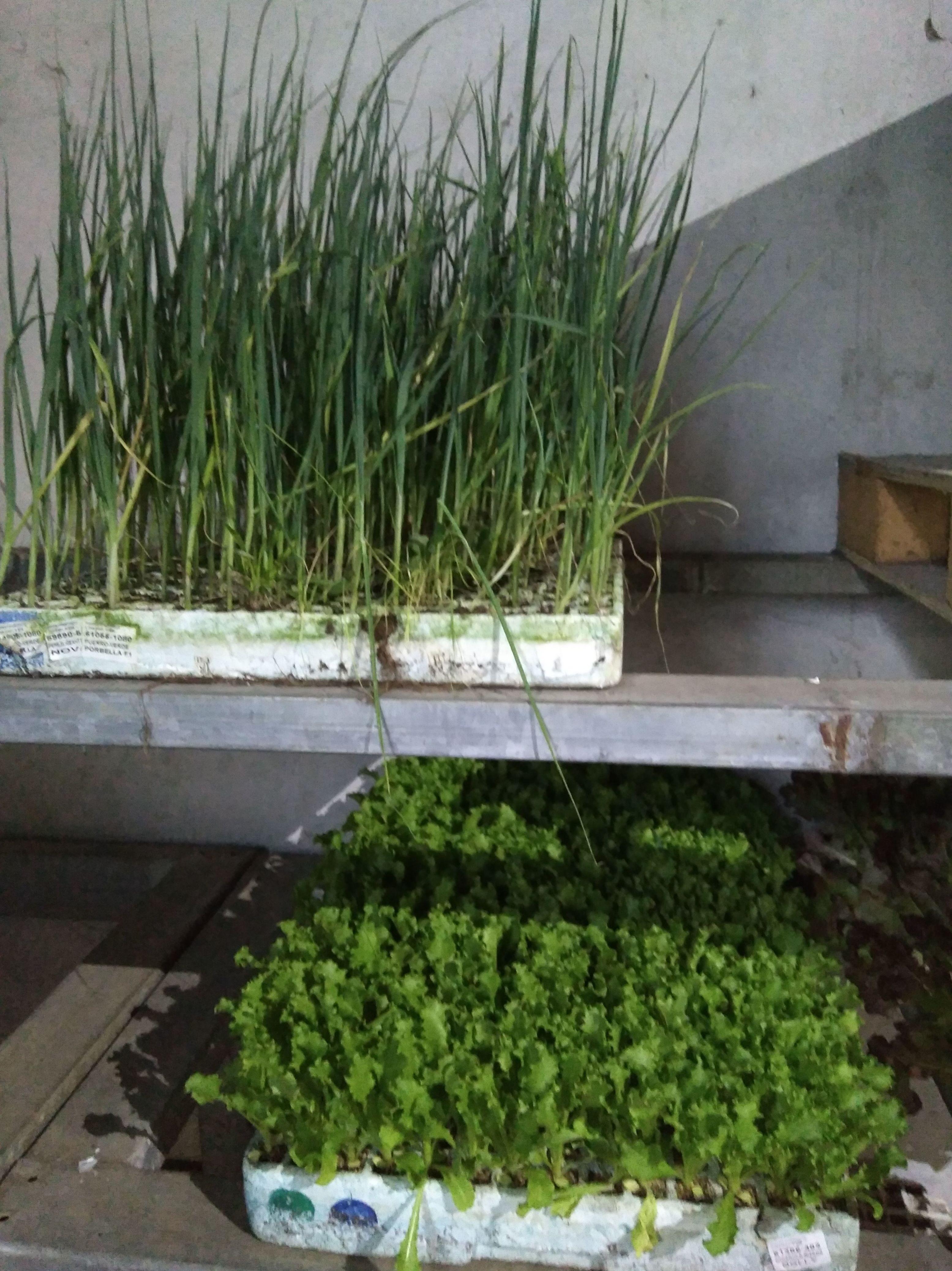 Plantas para siembra en Gallarta