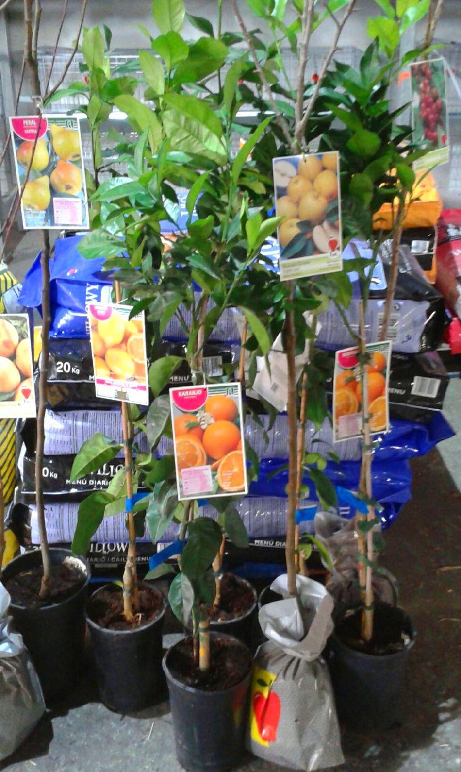 Venta de árboles frutales en Gallarta