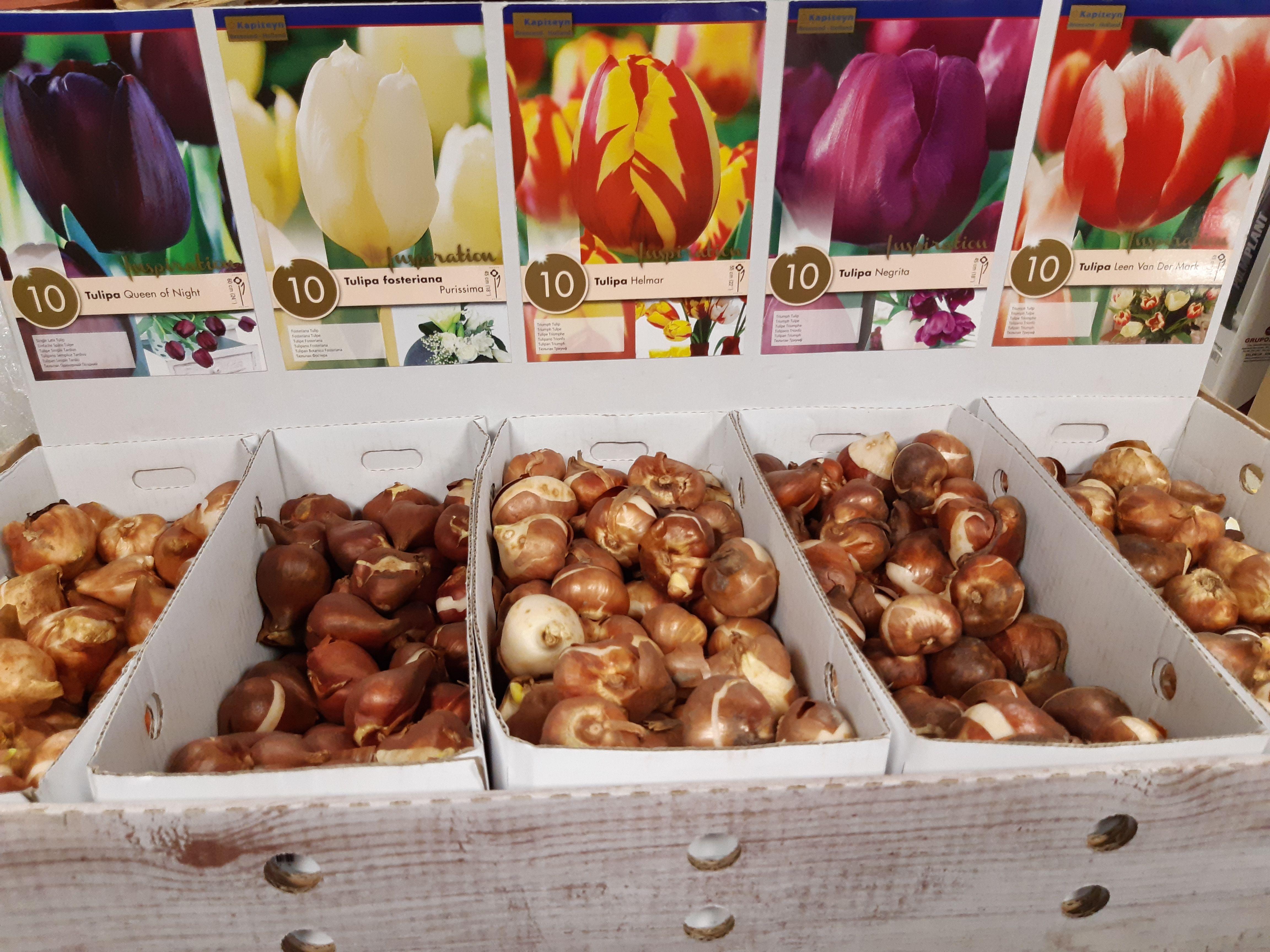 Foto 6 de Alimentos para animales en Gallarta | Piensos Alonso