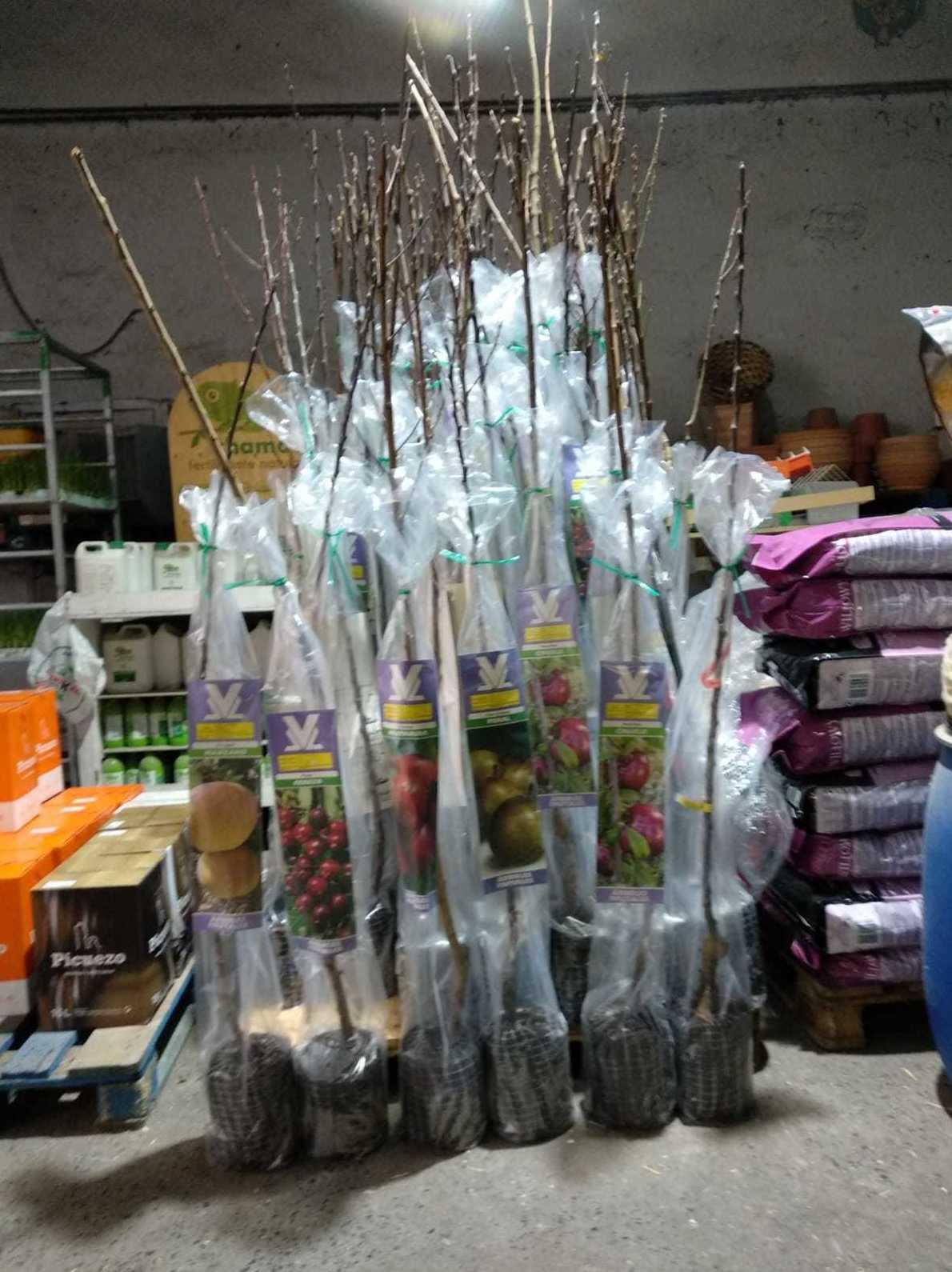 Arboles frutales para plantar en Gallarta