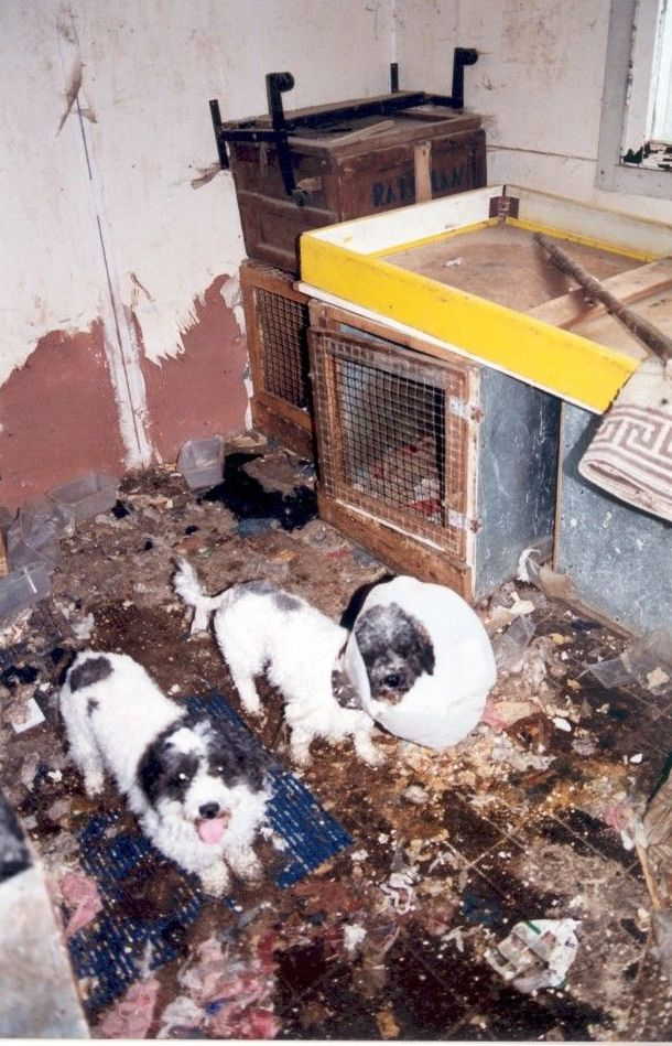 El Parlamento Europeo da un paso para terminar con el tráfico ilegal de cachorros en la UE