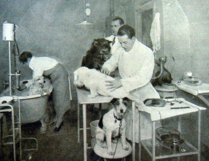 peluqueria canina de 1927