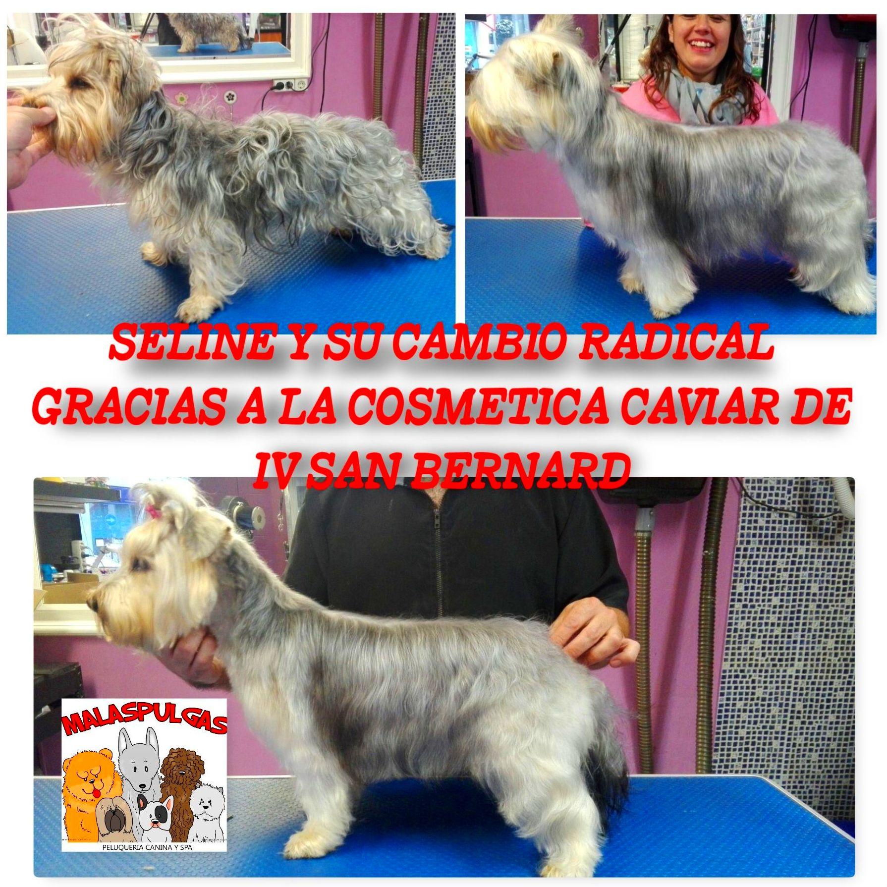 peluqueria canina en nou barris