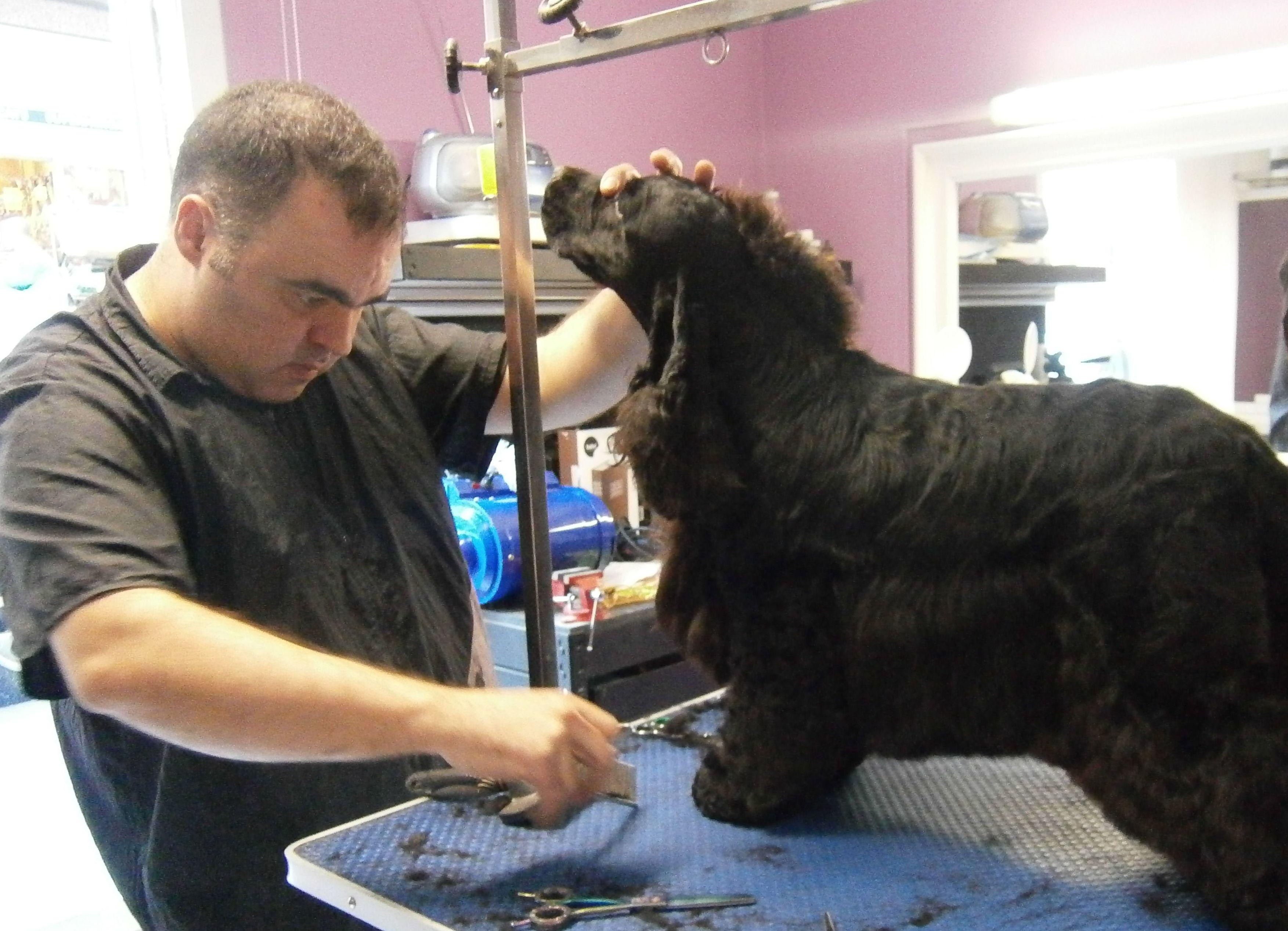 Malaspulgas, peluquería canina en Barcelona