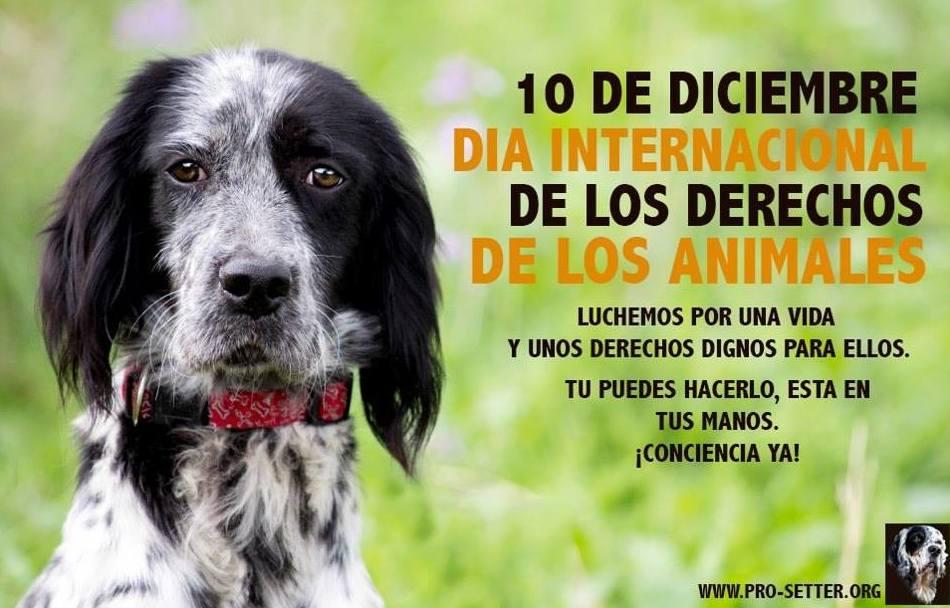 Dia Internacional De Los Derechos De Los Animales