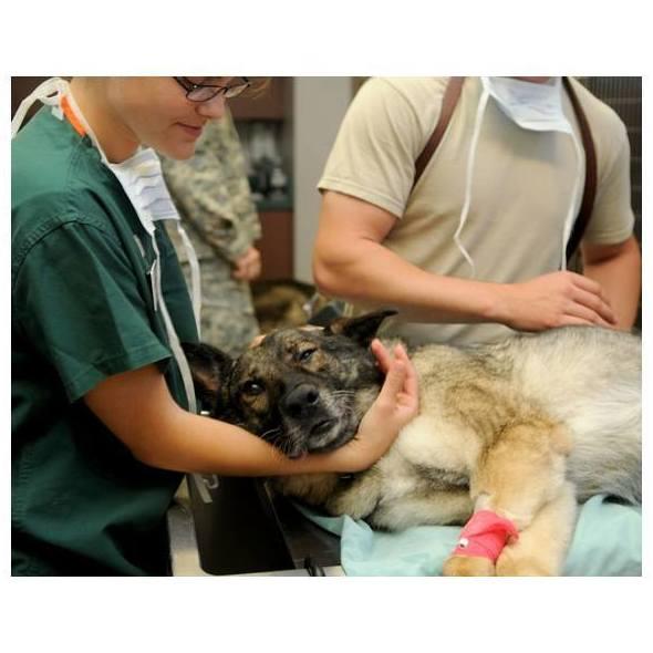 Endoscopia: Servicios de Arca Hospital Veterinario
