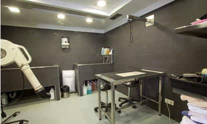 Peluqueria: Servicios de El Arca Clínica Veterinaria