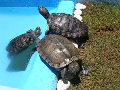 Animales exóticos: Servicios de Arca Hospital Veterinario