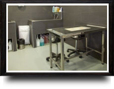 Foto 7 de Veterinarios en A Coruña | Arca Hospital Veterinario