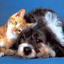 Canina y felina: Servicios de El Arca Clínica Veterinaria