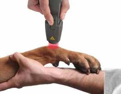 Laserterapia: Servicios de Clínica Veterinaria Animalium
