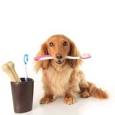 Salud dental: Servicios de Clínica Veterinaria Animalium