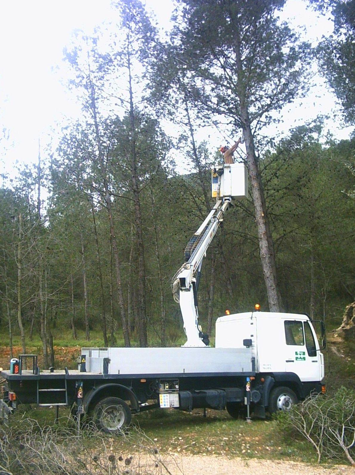 Foto 5 de Explotación forestal en Moixent | Moixent Forestal