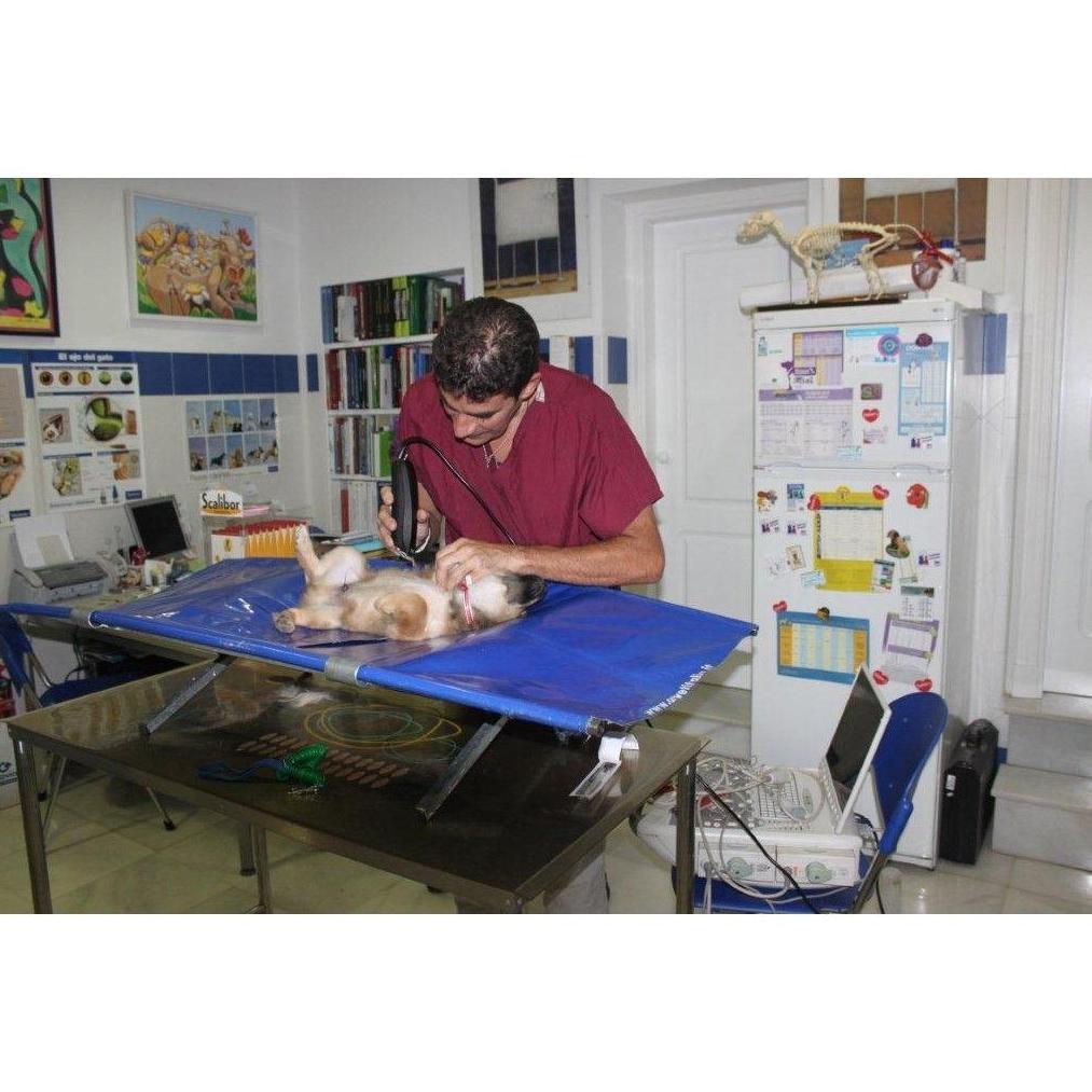 Especialistas: Servicios de Clínica Veterinaria Fábula