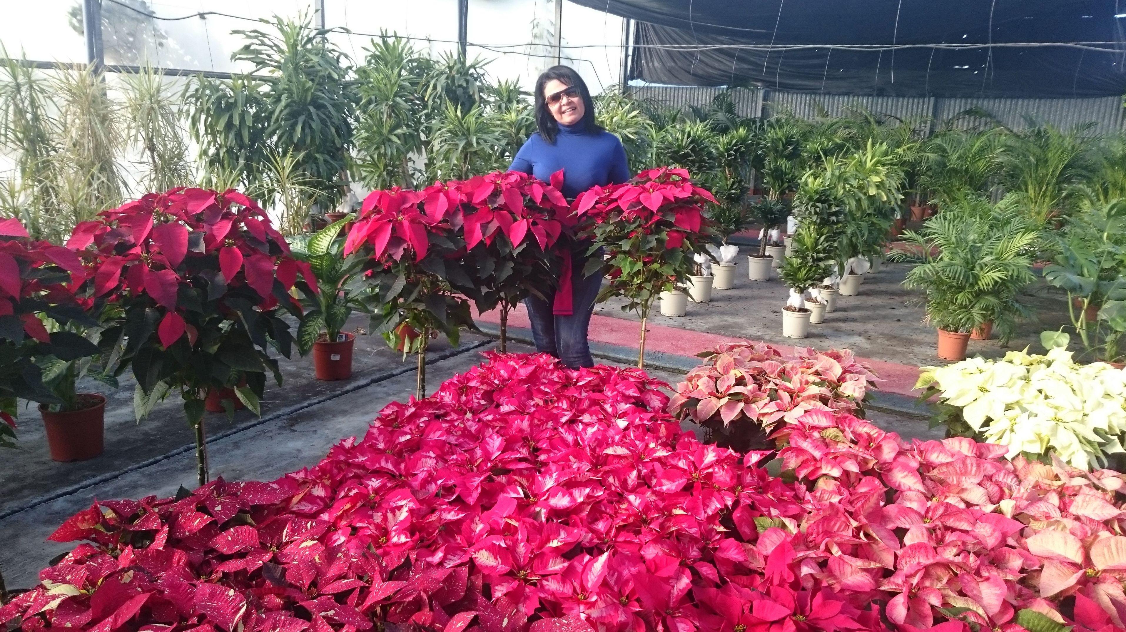 Sara mi mujer con sus flores preparando la navidad