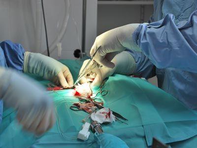 Cirugía General: Tratamientos y servicios de Clínica Veterinaria Camarma