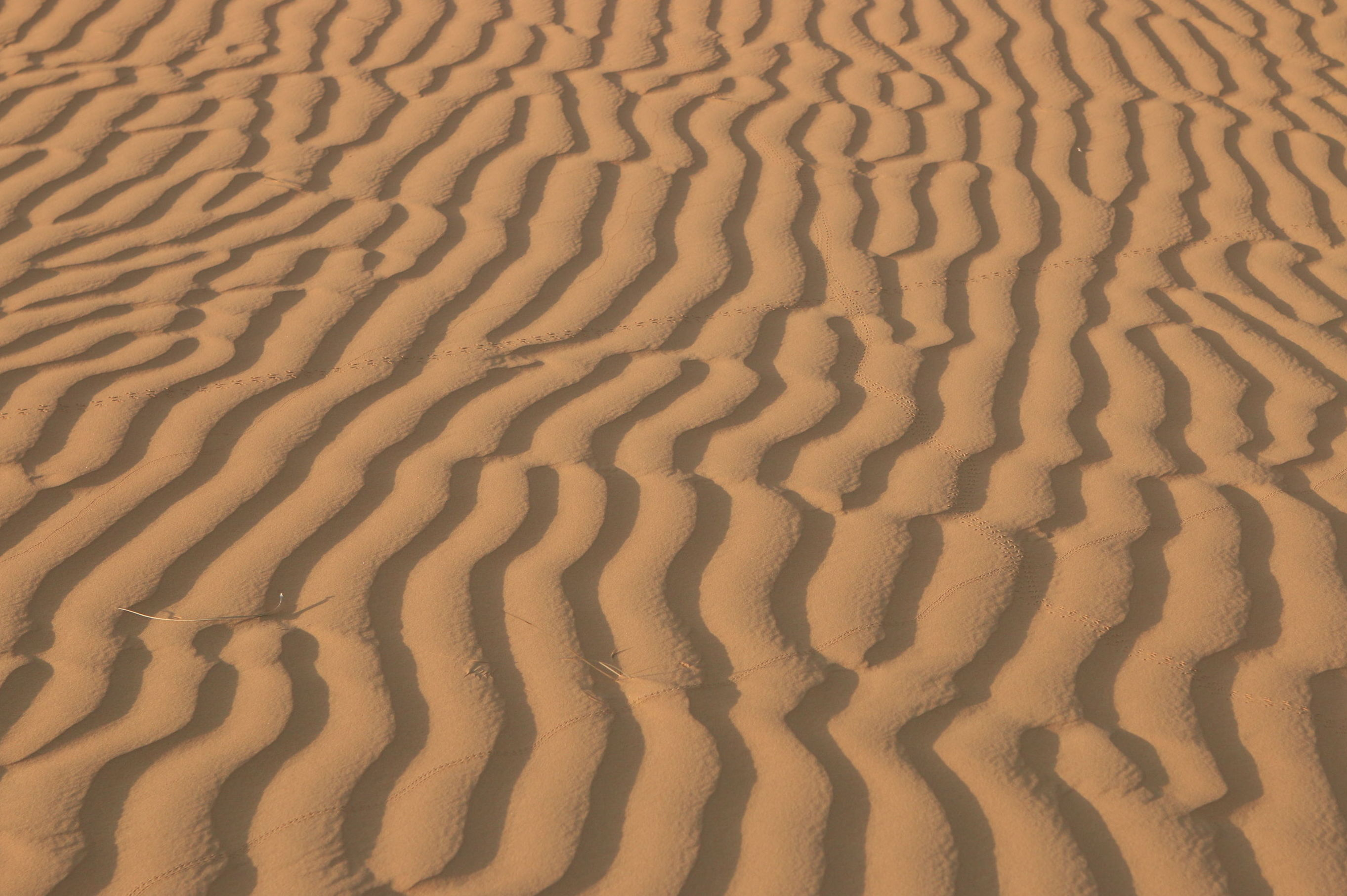 Oman. Wahiba Sands. www.exploramunt. com  (c) David Casajuana