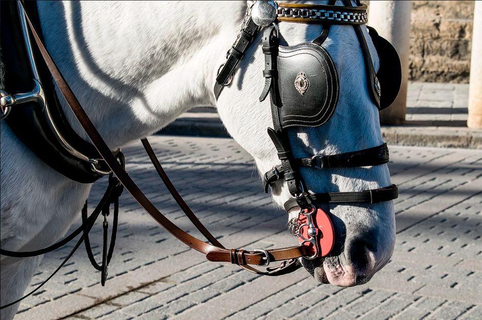 Visitas turísticas en coches de caballos en Sevilla