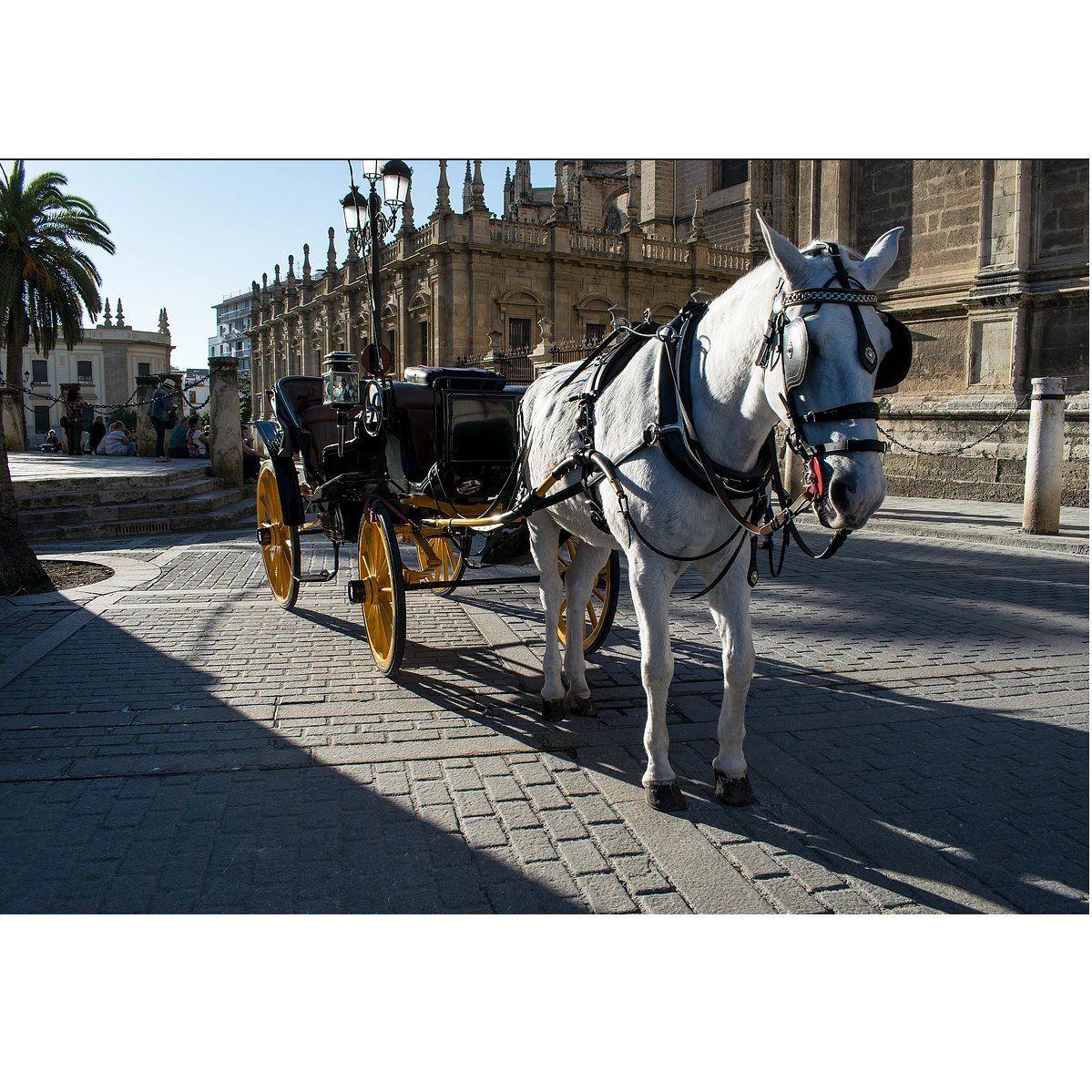 Paseo personalizado en coche de caballos: Servicios que prestamos de JV Tours Sevilla