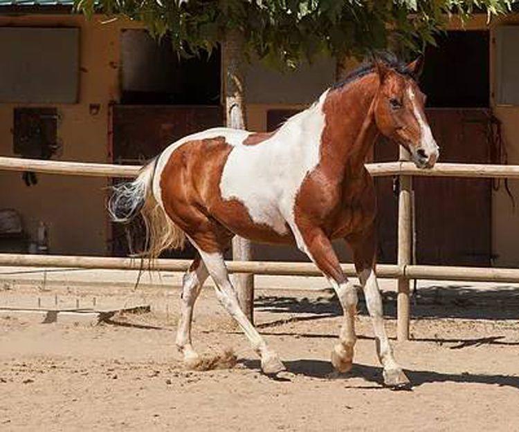 Clases de equitación en El Maresme