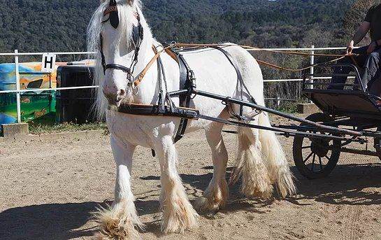 Adiestramiento de caballos