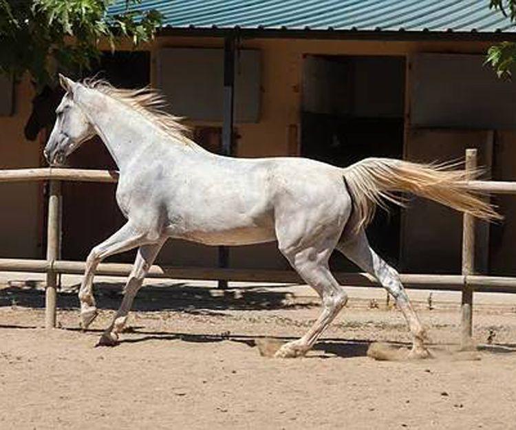 Servicio de pupilaje de caballos