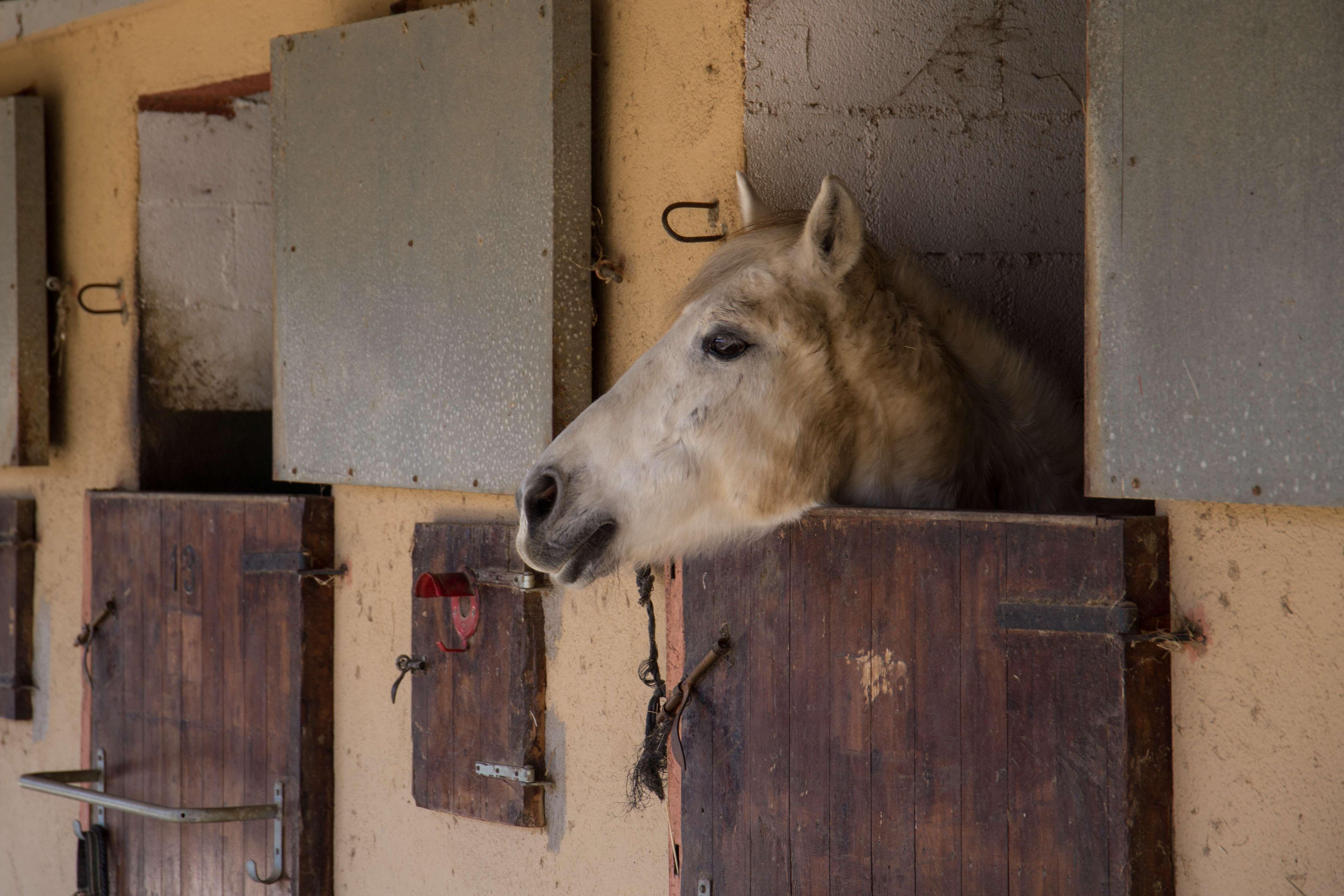 Equitación en un entorno natural, en la comarca del Maresme.