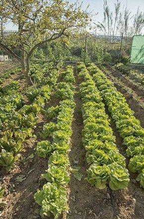 Venta verduras ecológicas Málaga