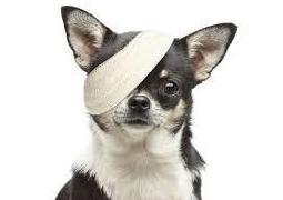 Oftalmología: Servicios de SOS Animal Catycan