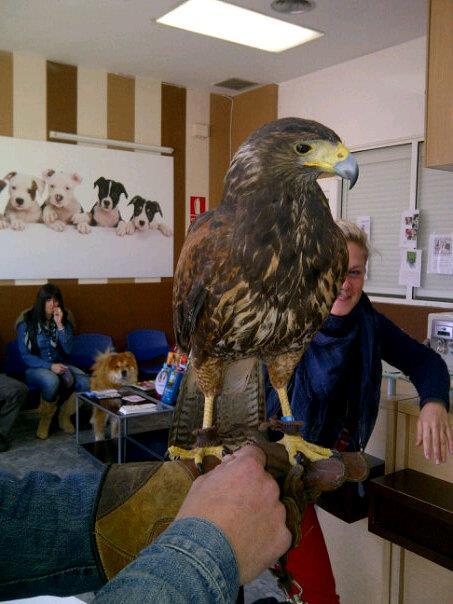 Foto 9 de Veterinarios en Málaga   SOS Animal Catycan