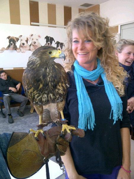 Foto 7 de Veterinarios en Málaga | SOS Animal Catycan
