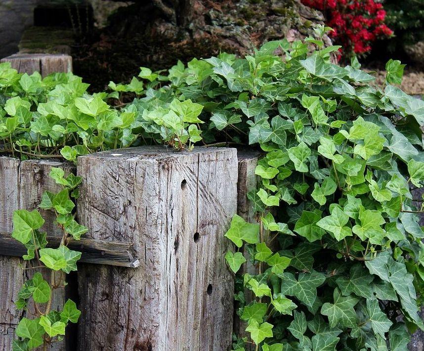 Foto 8 de Jardines (diseño y mantenimiento) en Durango | Jardines Patxi Lorategiak