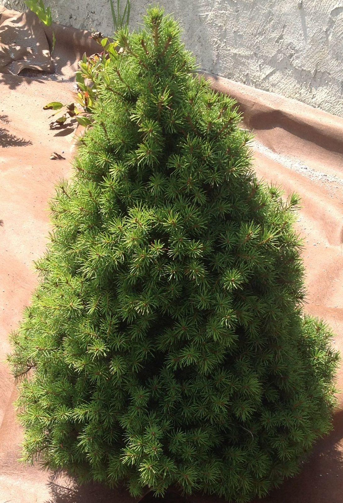 Foto 17 de Jardines (diseño y mantenimiento) en Durango | Jardines Patxi Lorategiak