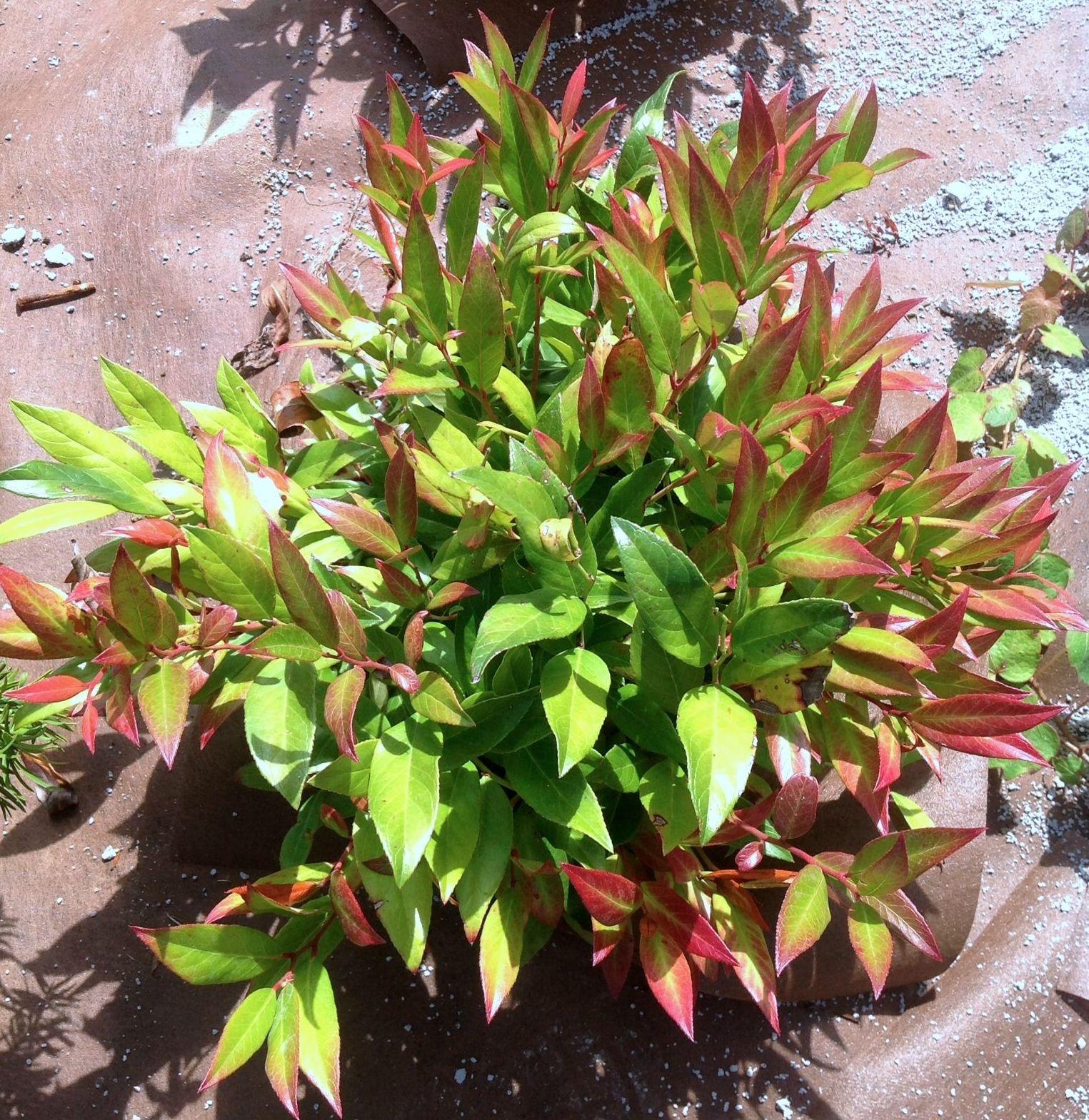 Foto 15 de Jardines (diseño y mantenimiento) en Durango | Jardines Patxi Lorategiak