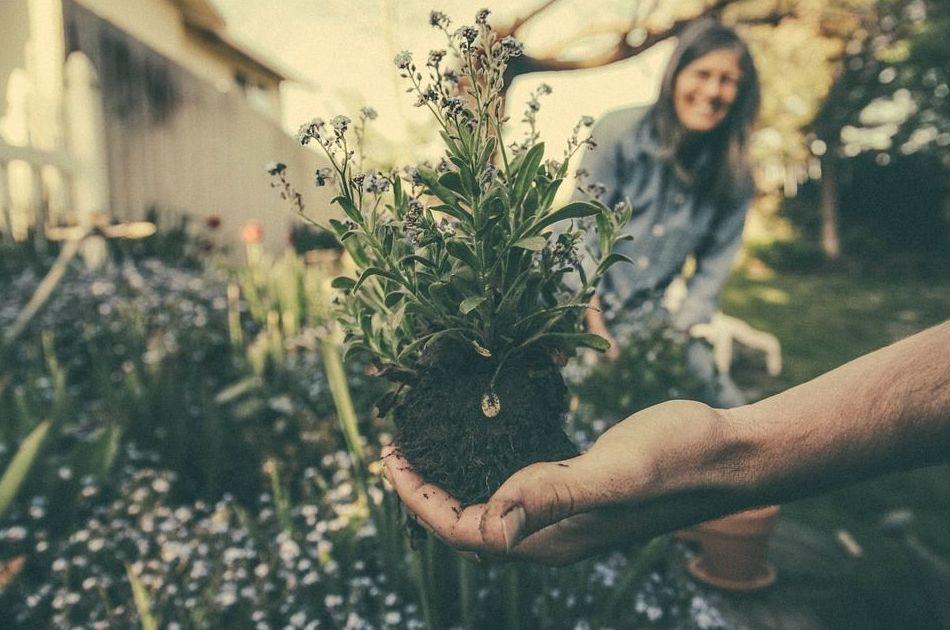 Foto 9 de Jardines (diseño y mantenimiento) en Durango | Jardines Patxi Lorategiak
