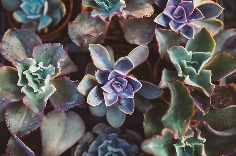 Foto 2 de Jardines (diseño y mantenimiento) en Durango | Jardines Patxi Lorategiak