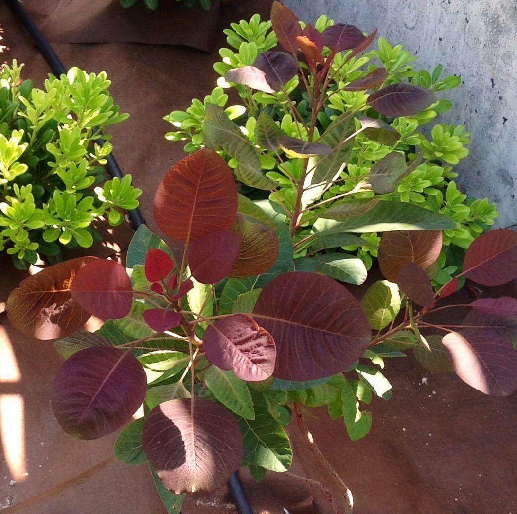 Foto 18 de Jardines (diseño y mantenimiento) en Durango | Jardines Patxi Lorategiak