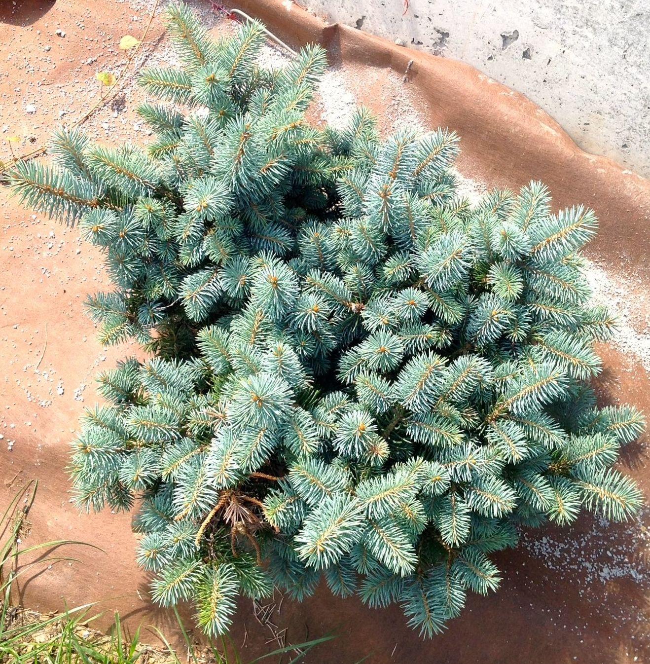 Foto 16 de Jardines (diseño y mantenimiento) en Durango | Jardines Patxi Lorategiak