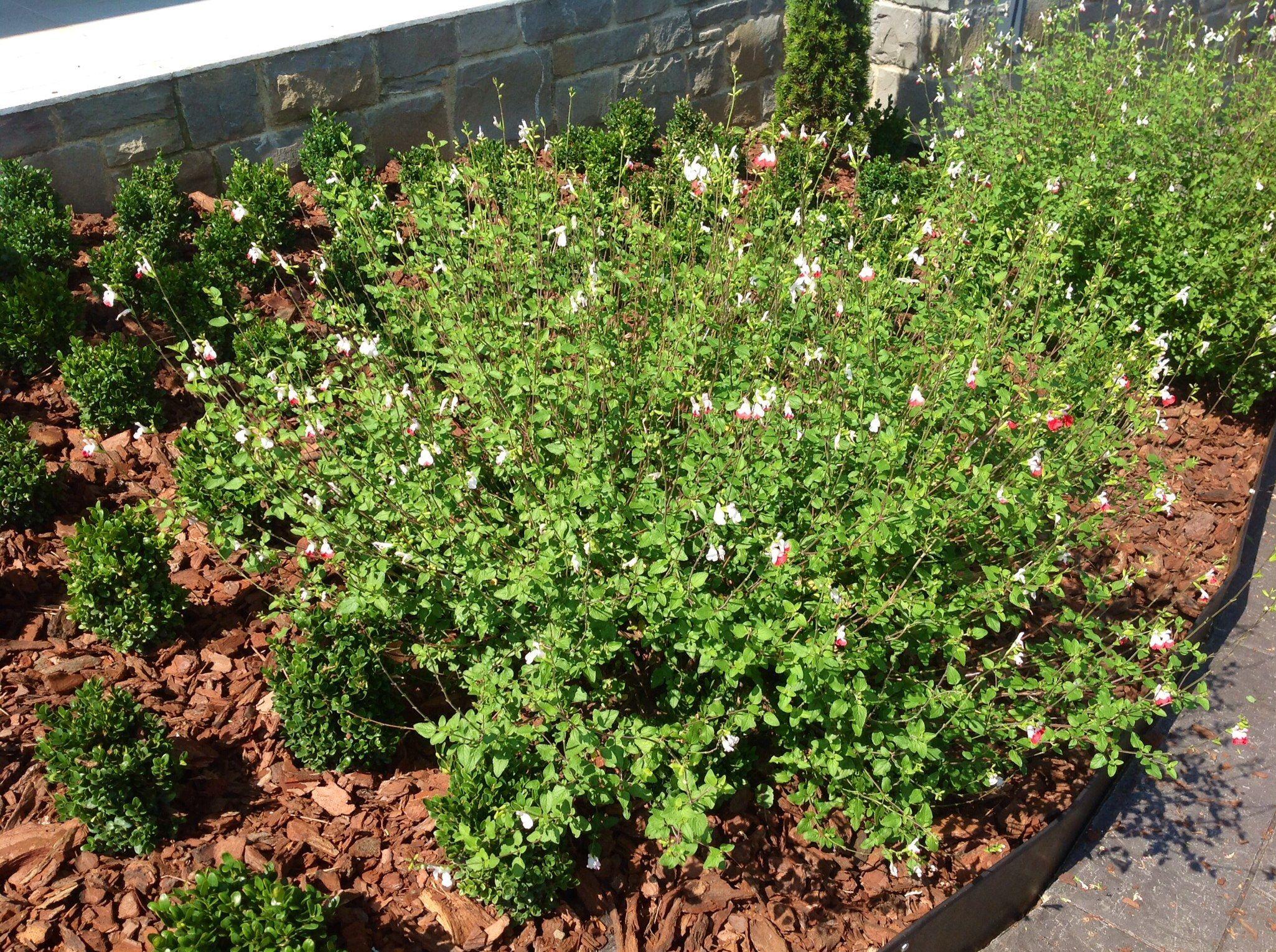 Foto 13 de Jardines (diseño y mantenimiento) en Durango | Jardines Patxi Lorategiak
