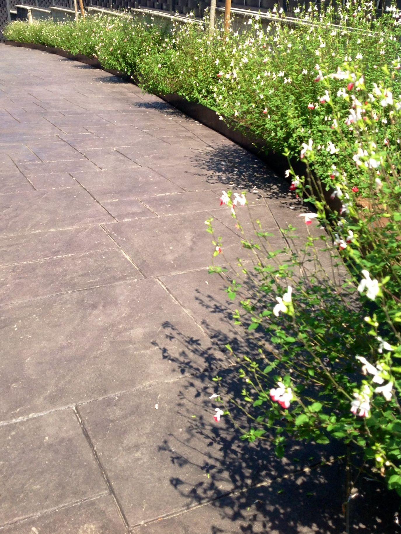 Foto 22 de Jardines (diseño y mantenimiento) en Durango | Jardines Patxi Lorategiak
