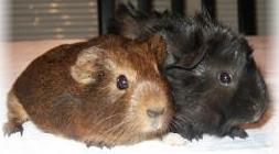 Veterinario de animales exóticos: Catálogo de Clínica Veterinaria Los Galgos