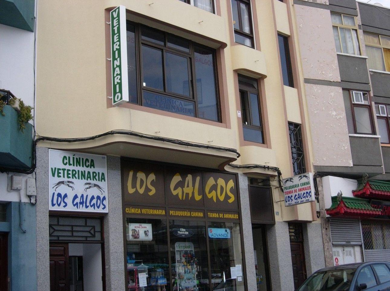 Consulta general: Catálogo de Clínica Veterinaria Los Galgos