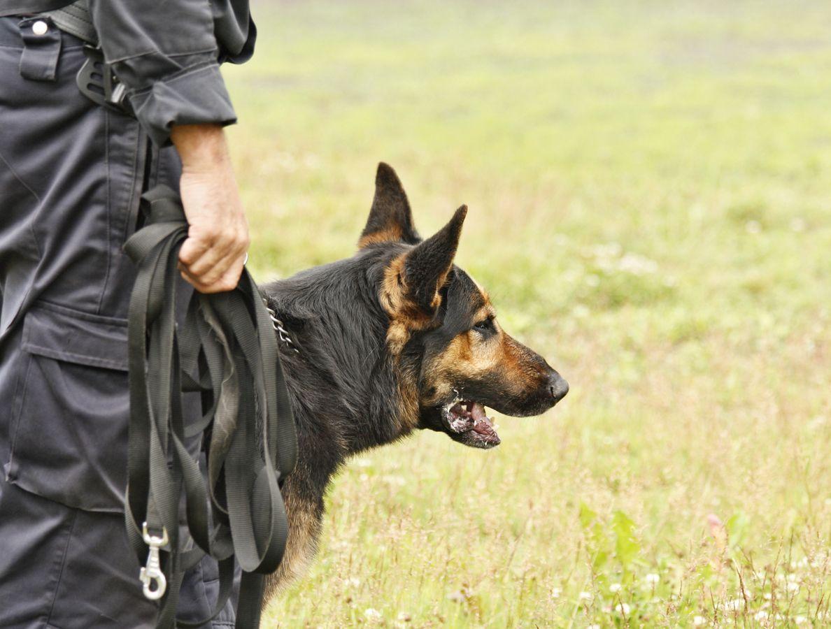Material de adiestramiento canino en Castellón